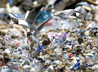 Aves se llenan el estómago de plástico.