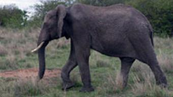 Elefant on safari Ludger Schadomsky