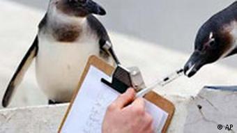 Volkszählung bei den Pinguinen