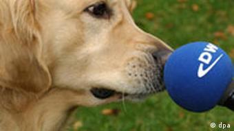 Hund mit DW Mikrofon Deutsche Welle Mikrofon Janine Albrecht