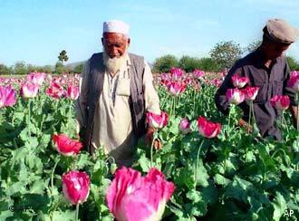 Over 90 percent of the world's opium is cultivated in Afghanistan