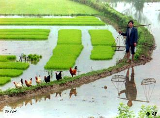 Asian farmers find little incentive to improve productivity