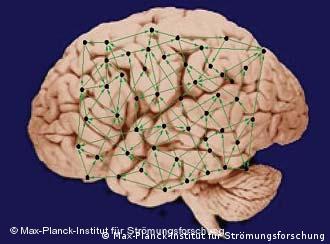A 'fiação' do cérebro