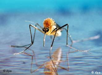 Mosquitoes carrying dengue fever are spreading in Pakistan
