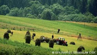 Galerie EPA EU Erweiterung Polen Ernte