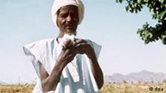 Baumwoll-Bauer im Sudan überprüft die Qualität der Ernte (Bild: AP)