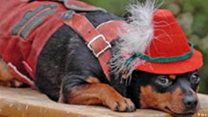 A dog wearing a Bavarian hat and lederhosen (dpa)