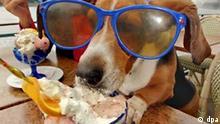 Der Hund macht Urlaub