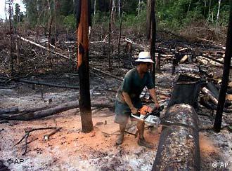 Pressão agrícola diminui a área de florestas no Brasil