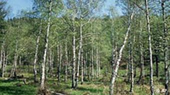 Wald in Rußland, Sibirien, Taiga