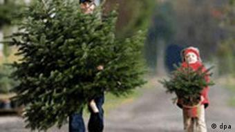 BdT: Weihnachtsbaumsaison eröffnet