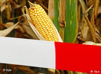 Europeans hope the ruling helps them to just say no to GMOs