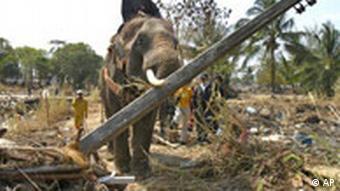 Flutkatastrophe Erdbeben Khao Lak Thailand Elefanten helfen beim Wiederaufbau der zerstörten Infrastruktur
