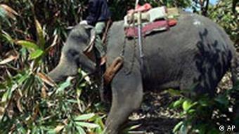 Bildgalerie Hilfsaktion in Südasien Thailand Elefant