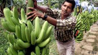 Colombian banana farmer