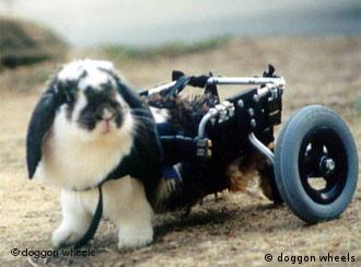 ... oder auch fürs Kaninchen