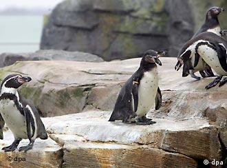 No mixed-sex frolicking on the rocks at Bremerhaven zoo
