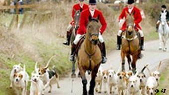 Fuchs Jagd in England