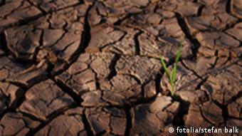 Ein ausgetrockneter Boden und ein einzelner Grashalm