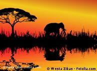 Botsuana tem maior população de elefantes da África