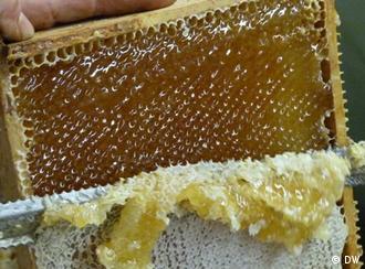 Seca no Nordeste diminuiu exportação brasileira de mel em 25%, de acordo com Etene