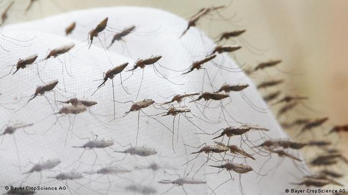 Flash-Galerie Krankheit Malaria
