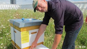 A beekeeper is llooking at waste on a sheet he has pulled from a beehive box.(photo: dw)