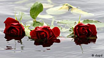 Red roses float in the water close to Utoya island, where gunman Anders Behring Breivik killed at least 68 people in Sundvollen, near Oslo, Norway, Tuesday, July 26, 2011. (Foto:Ferdinand Ostrop/AP/dapd)