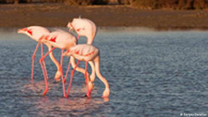 Wandernde Tierarten unter dem Schutz von United Nations CMS