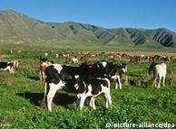 Consumo de carne agrava problema mundial de alimentação