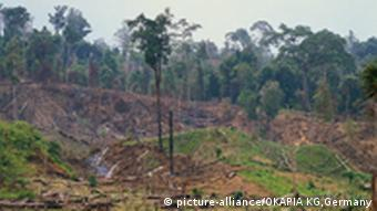 Bäume Abholzung Brandrodung von Regenwald Umweltzerstörung Rodungsflächen neu rainforest, deforestation zwischen Samarinda und Bontang Kalimantan Borneo Indonesien rainforest clearing/Borneo