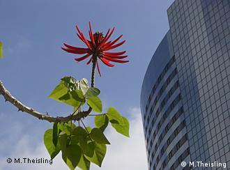 Blühende Pflanze vor einem Bürogebäude