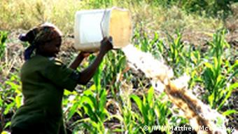 A woman watering vegetables in a wetland in Mozambique