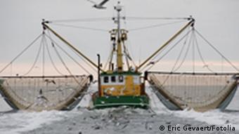 Fish Fight Trawler