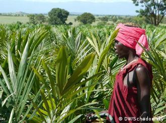 Flash-Galerie Äthiopien Land Grab