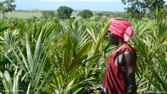 A person looknig a field of palm Photo: Ludger Schadomsky / DW