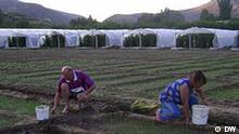 Mazedonische Saisonarbeiter, bei Basino selo, in der nähe von Veles, Mazedonien (Aufnahmedatum August 2011)