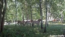 Naturschutzgebiet in der Nähe der ostukrainischen Stadt Charkiw. Der Naturpark heißt Starosaltywskyj rozplidnyk. Das Foto haben wir von der Umweltschutzorganisation Petschenihy bekommen. Die Rechteerklärung liegt in Ukrainischer Sprache vor. Das Bild wurde in Juli 2011 aufgenommen. Stichwörter: Naturpark-Charkiw. Zulieferer: Yevgen Teyze