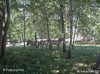 На 43 гектарах Юрій Оршанський створив острівець дикої природи