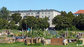 Vegetable plots at Berlin's Tempelhof airport grounds