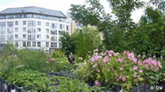 Prinzessinengarten in Kreuzberg, Berlin