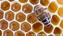 Future Now Projekt Bionik Bild 7 Bienenwaben