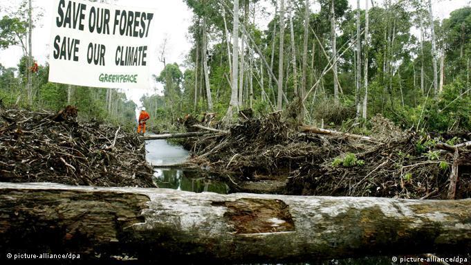 Flash-Galerie 40 Jahre Greenpeace Regenwald Klimaschutz 2007 Protest Indonesien, Sumatra