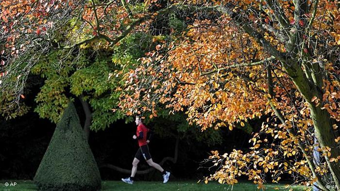 Jogger im Herbst (Foto: Matthias Rietschel/dapd)