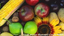 Colorful image of a sunflower, apples, pears and corn (picture-alliance/All Canada Photos)