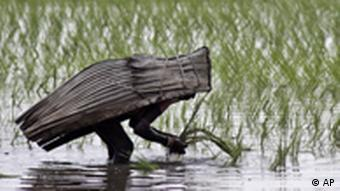 A village woman covers herself with a rain cover made of palm leaves as she sows paddy in a field on the outskirts of Bhubaneshwar, India, Friday, Aug. 26, 2011. (AP Photo/Biswaranjan Rout)