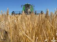 Colheita de trigo na Alemanha