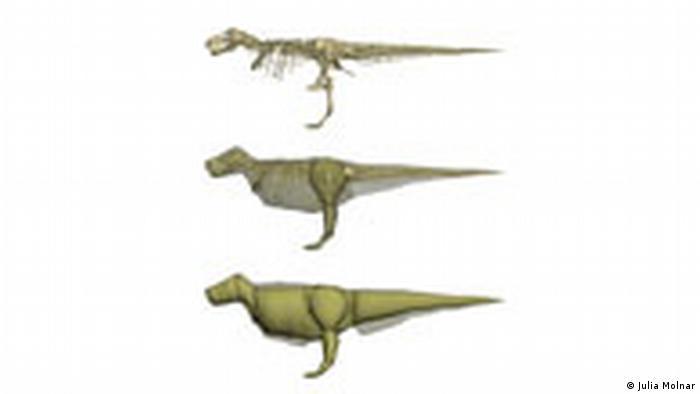 Rekonstruktion Tyrannosaurus Rex