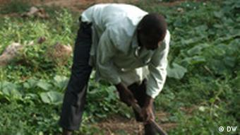 A man working in a field in Niger
