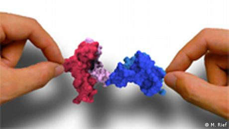 Proteinmolekül wird mit Laser gehalten